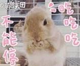 可爱小兔几qq表情包