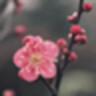 梅花易数算命app