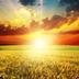陽光高考信息平臺