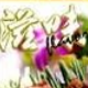 zinemaker2007免注册版(电子杂志制作)