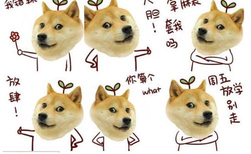 dogeQQ表情第三季小学生动态图搞笑图片图片