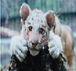动物遇上美颜相机表情图