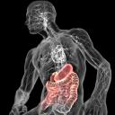 三维人体解剖软件(3dbody)