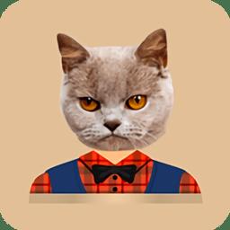 猫头贴纸(cat strickers)