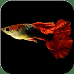 鱼缸计算器手机版