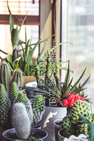爱花草软件 v4.9 安卓版 4