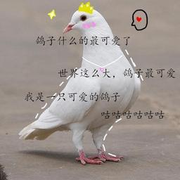 鴿子咕咕咕表情包原圖