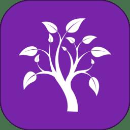 小树优选电商平台