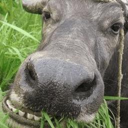 老牛吃嫩草的表情包无水印版