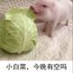 小白菜今晚有空吗小猪图片