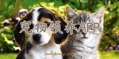宠物领养app