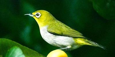 各种鸟的叫声有哪些?鸟叫声大全免费下载-鸟叫声音