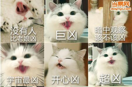 首页 联络聊天 qq表情包  → 超凶的猫咪表情包   软件标签:  超凶的