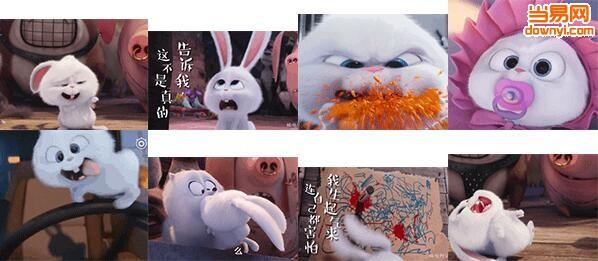萌宠大机密小白兔qq表情包 截图0